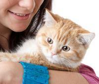 Правда об аллергии на домашних животных
