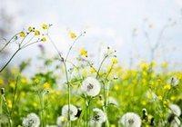 Аллергия: симптомы, лечение и профилактика